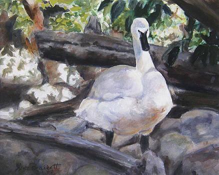 The Swan by Lori Brackett