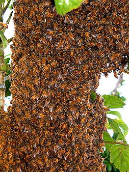 The Swarm by Don Bangert