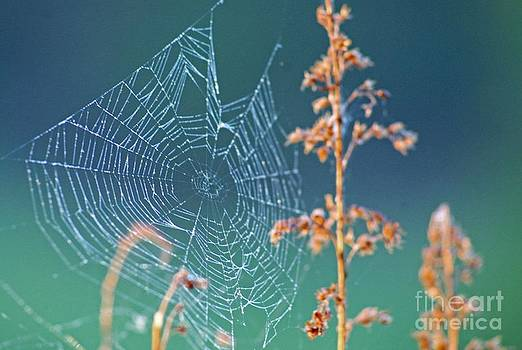 The Tangled Webs We Weave by Adam Dowling