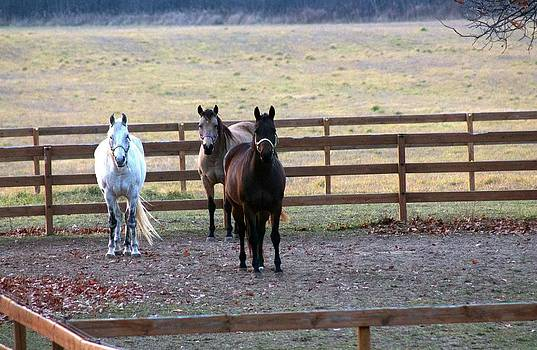 The Three Amigos by Rhonda Humphreys
