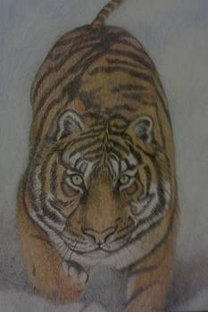 The Tiger by Christy Saunders Church
