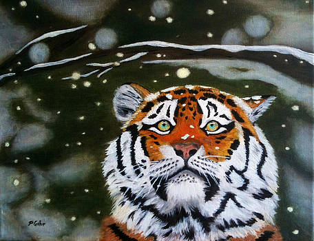 The Tiger in Winter by Dr Pat Gehr