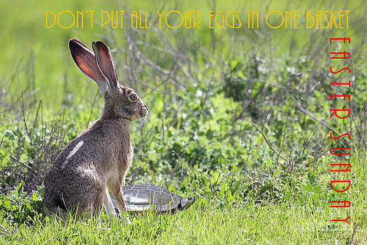 Wingsdomain Art and Photography - The Tortoise and The Hare Dont Put All Your Eggs In One Basket Easter Sunday 40D12379