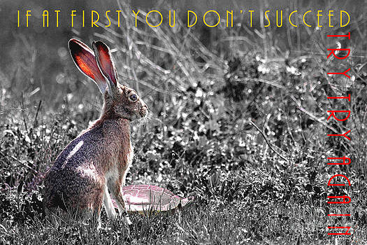 Wingsdomain Art and Photography - The Tortoise and The Hare Try Try Again 40D12379 black and white