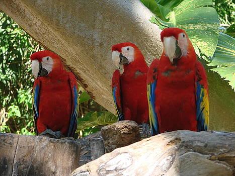 The Tree Amigos by Michael Kovacs