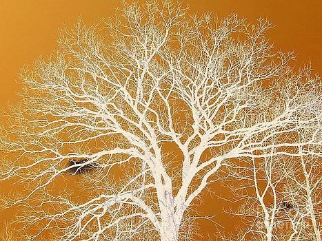 The Tree by Katina Cote