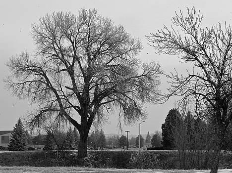 The Tree by MLEON Howard