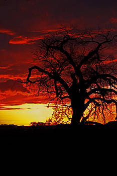 The Tree of Doom by Margaret  Slaugh