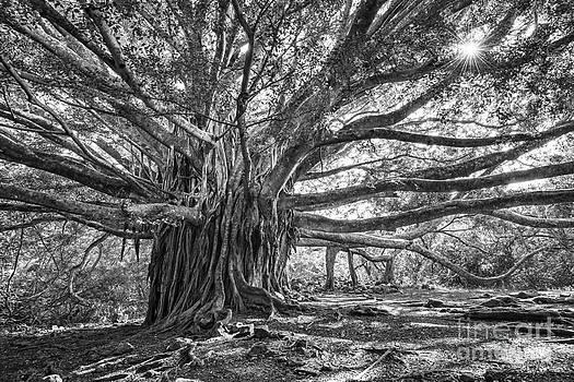 Jamie Pham - The Tree of Life