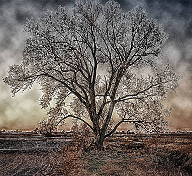 The Tree of Life by Kimberleigh Ladd