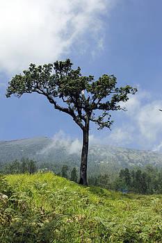 The Tree by Yusron Rohim