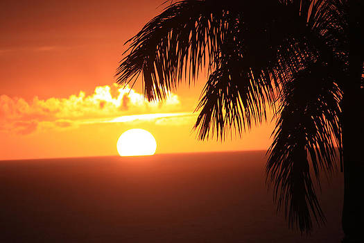 The Tropics by Karen Nicholson