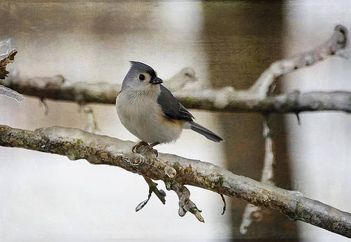 The Tufted Titmouse on Ice by Lisa Moore