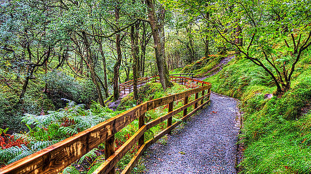 The Twisting Pathway by Kim Shatwell-Irishphotographer