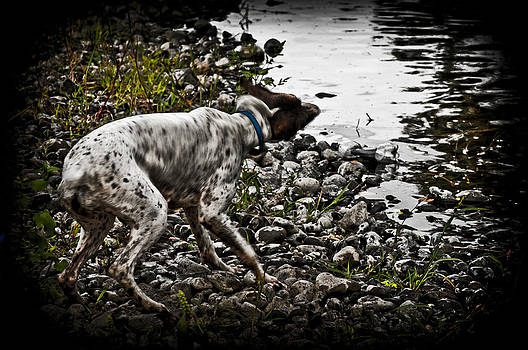 The Water Dog by Denise Teague