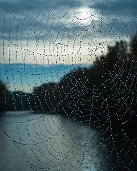 The Web Reiver by Brian Orlovich