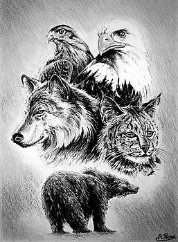 The Wildlife Collection by Andrew Read