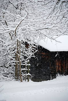 The Winter Shed by Mary Beth Landis