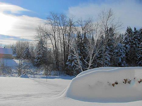 The Winter Woodpile by Sandra Martin