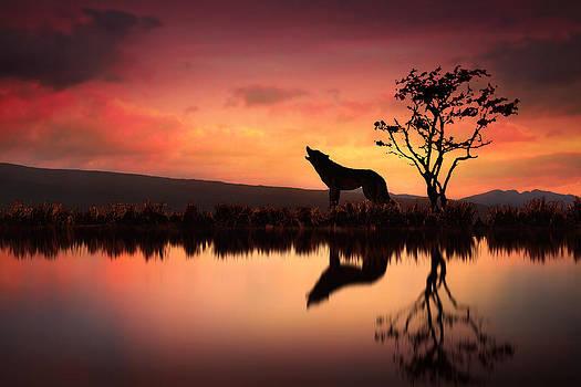 The Wolf at Sunset by Jennifer Woodward