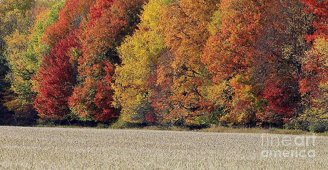 The Wonder of Fall by Kathy DesJardins