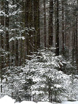The Woods are Lovely by Avis  Noelle