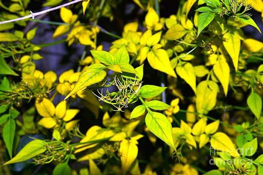 The Yellow Plant by Aqil Jannaty