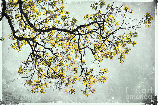 The Yellow Tree by Sharon Coty