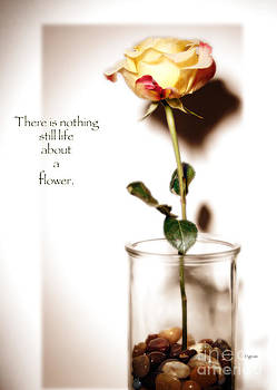 There is nothing still life about a flower  by Steven  Digman
