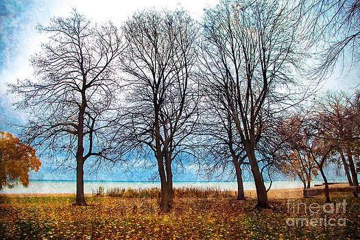These Three Trees by Jeanette Brown