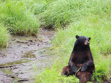 Thinking Bear by Karen Horn