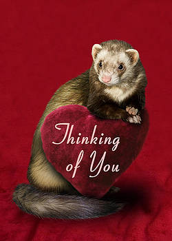 Thinking of You Ferret by Jeanette K
