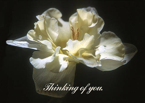 Thinking of you. by Harold E McCray