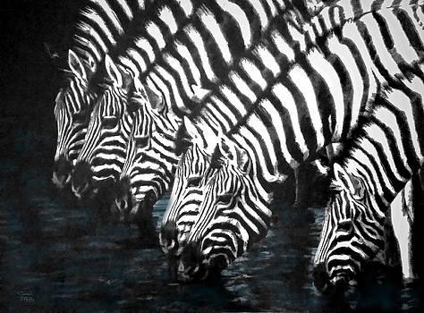 Thirsty Zebras  by Sandi OReilly