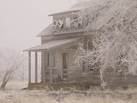 This Old House by Gordon Collins