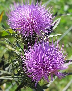 Thistle Wild Flower by Christine Bradley