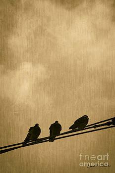 David Gordon - Three Birds On A Wire