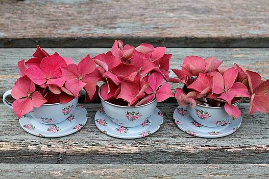 Three Cups and saucers in a Row by Emma Manners