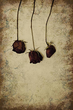 Three dried red roses by Bernice Williams