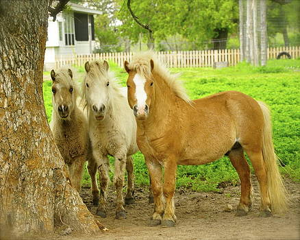 Three Friends by Cherie Haines