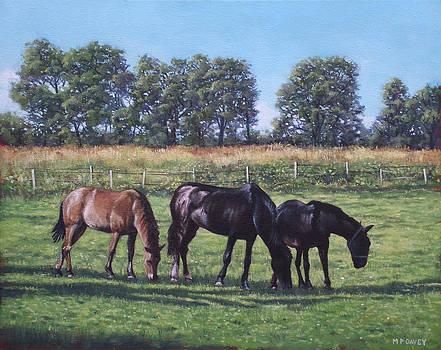 Martin Davey - Three horses in field