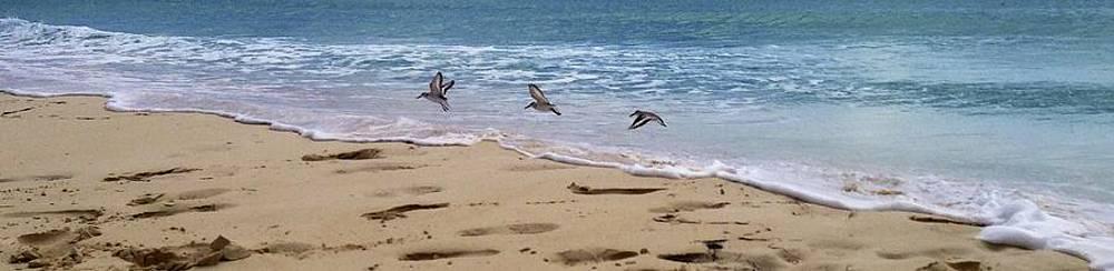 Three little birds in Anguilla by Jennifer Lamanca Kaufman