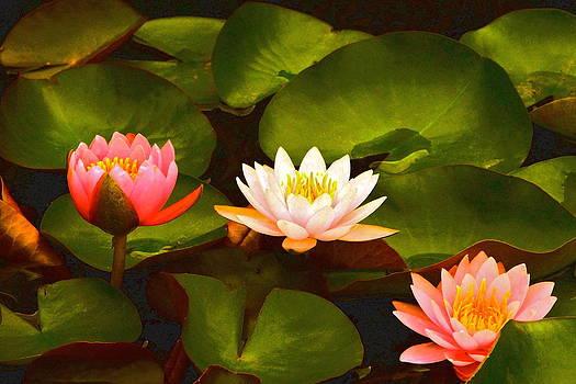 Byron Varvarigos - Three Lovely Gracious Waterlilies