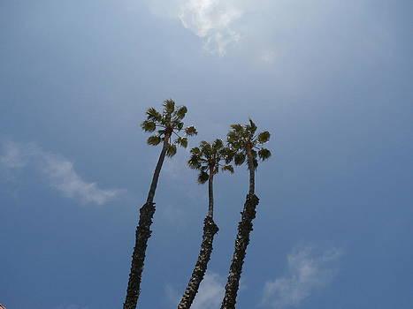 Three Palms by Tonie Cook