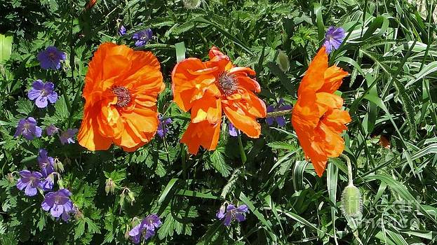 Three Poppies by Claudette Bujold-Poirier