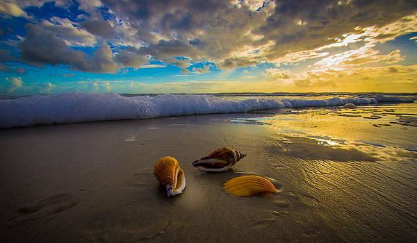 Three Shells at Sunrise by DM Photography- Dan Mongosa
