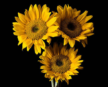 Three Sun Flowers by Joie Cameron-Brown