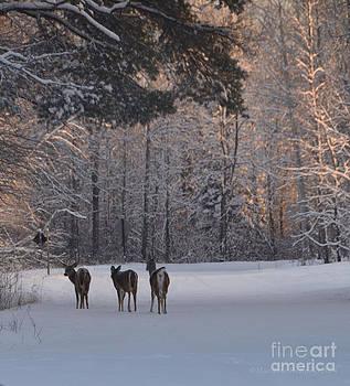 Three Tails by Marianne Kuzimski