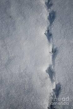Three toed steps by Susan Hernandez