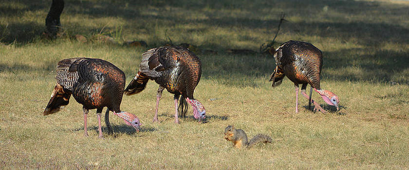 Three Toms and a Squirrel by Gale Cochran-Smith